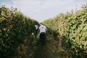 vinogradi TRS Vinarija